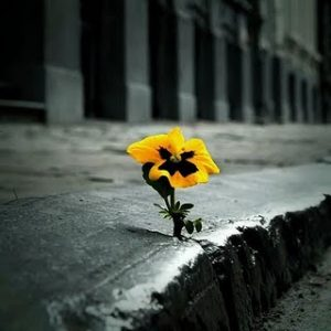 concrete_flower_by_axel_klauser-d5by14i